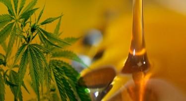 Principales beneficios del aceite de marihuana