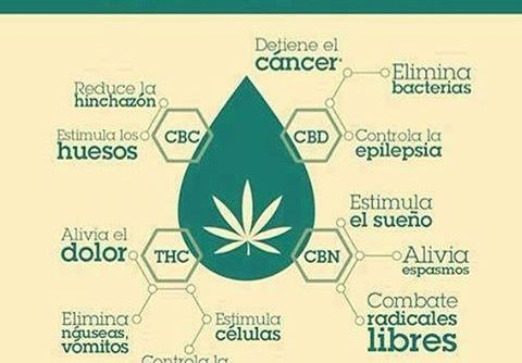 ¿Cuáles son los beneficios del aceite de marihuana?